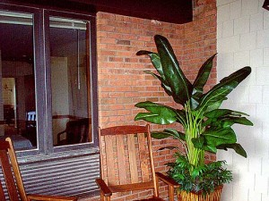 Porch with wooden chairs and potted plant